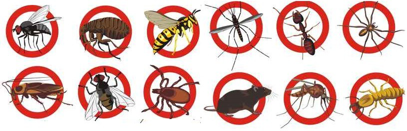 Pest Control Services Essex | Woodford | Waltham Abbey